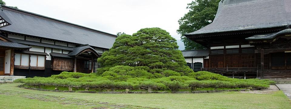 左右の松(山形県天然記念物)